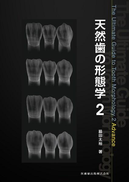 天然歯の形態学2